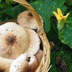 Ricetta facilissima: linguine con mazze di tamburo