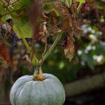 La zucca, l'ingrediente di stagione