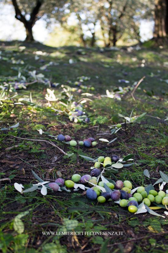olive del garda