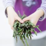 L'asparago selvatico, proprietà e usi in cucina
